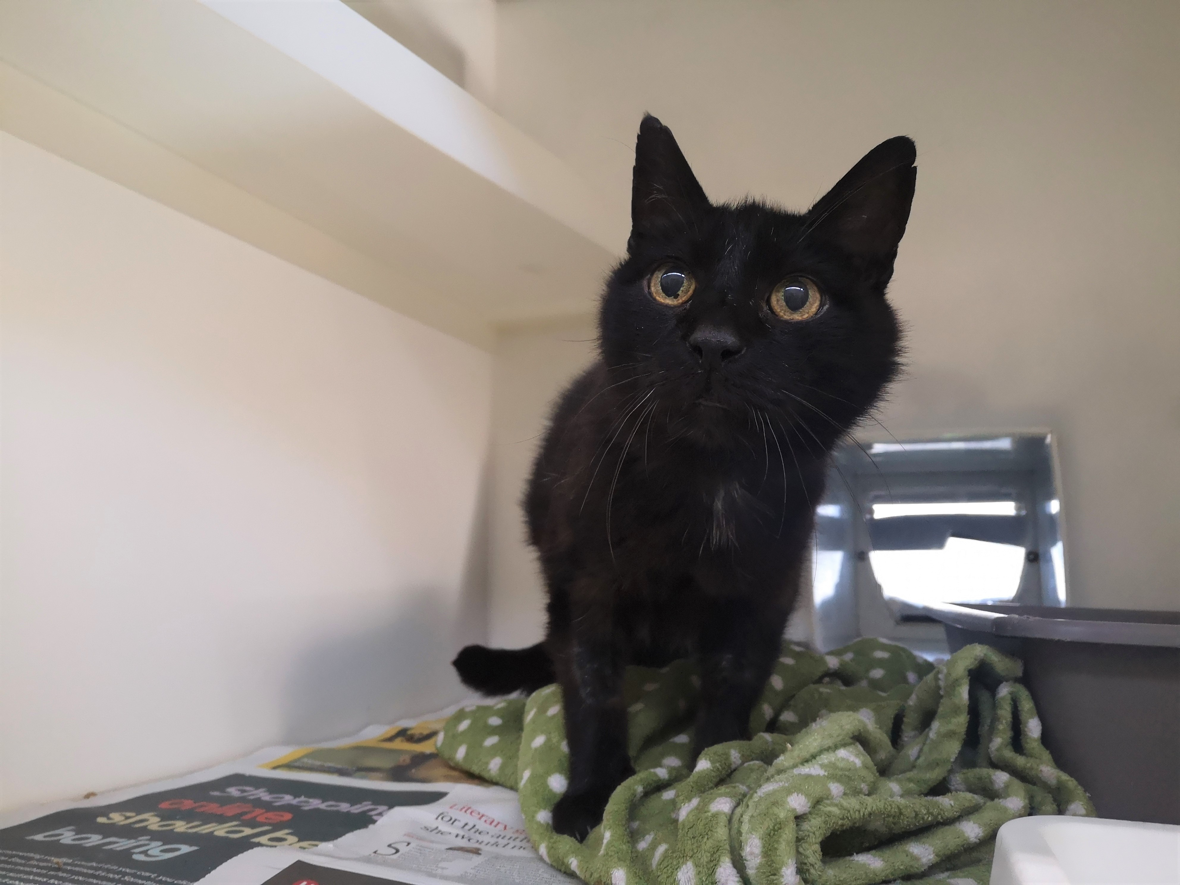 Laurence - adopt