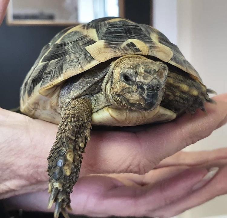 Reptiles - adopt