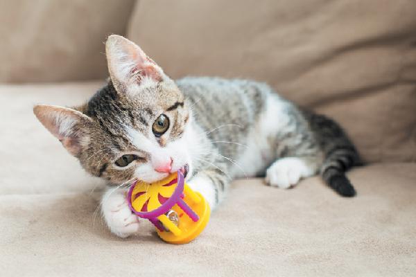 Cat Accessories & Toys