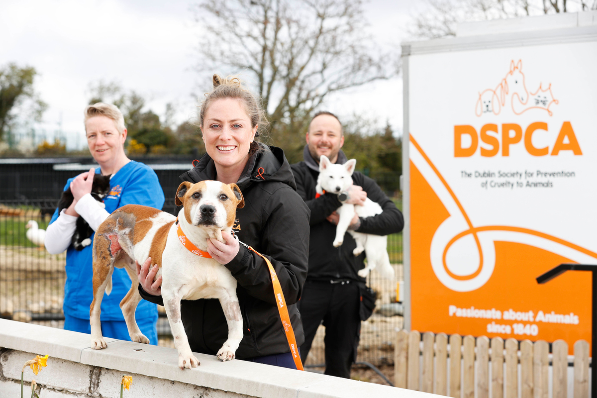 Six Part RTE TV Series, The Shelter: Animal SOS