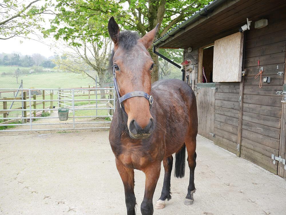 Horse Aware Week