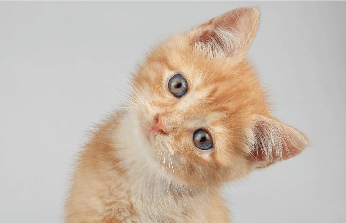 Cat Spay/Neuter