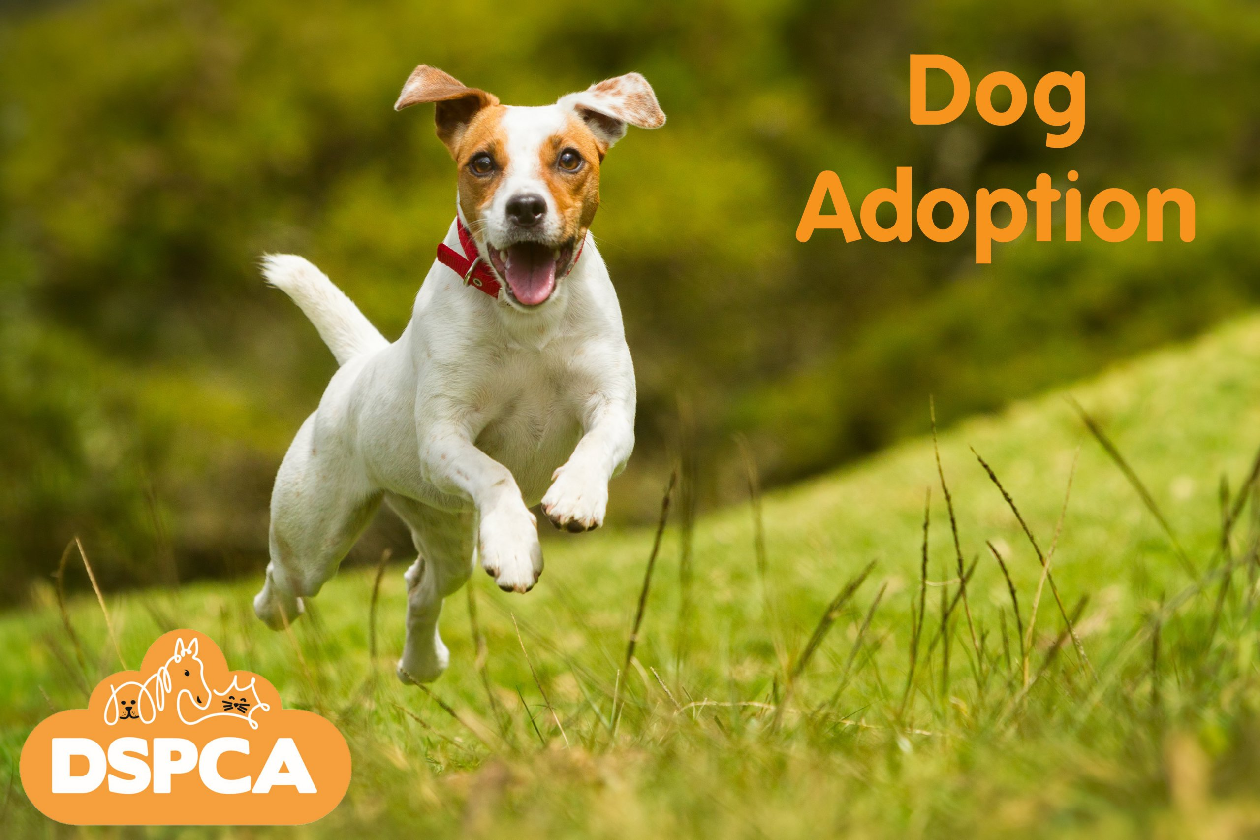 DSPCA Dog Adoption